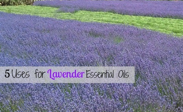 5 Uses for Lavender Essential Oils